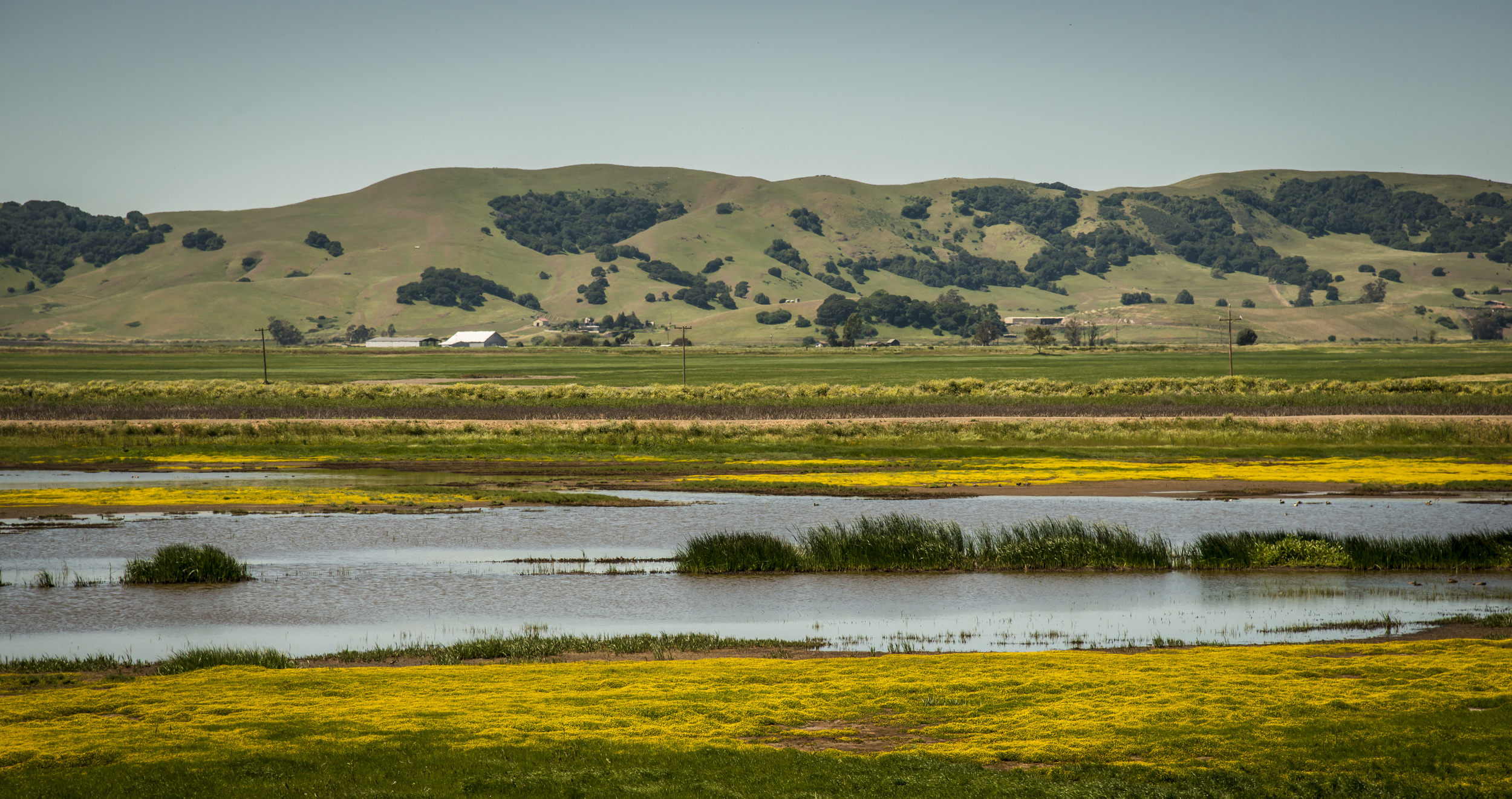 baylands-wildflowers
