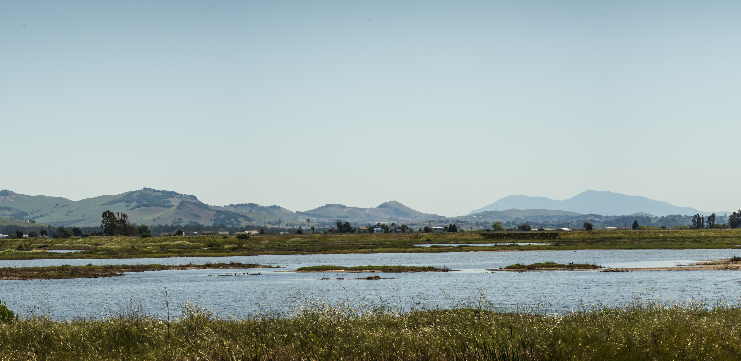 pano-wildlife-marsh12